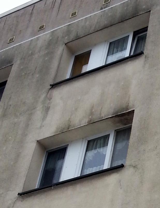 Mossbefall und Schimmel an Fassade durch ständige Kipplüftung.